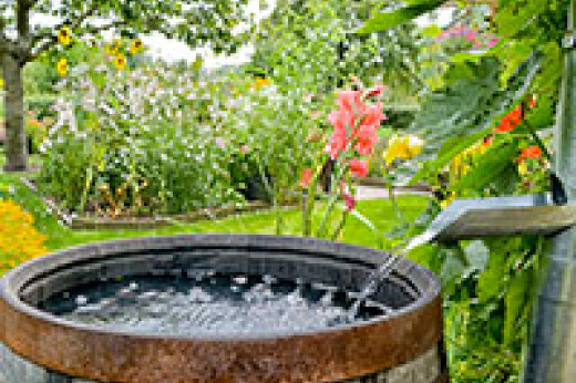 Rain Barrel Buying Guide