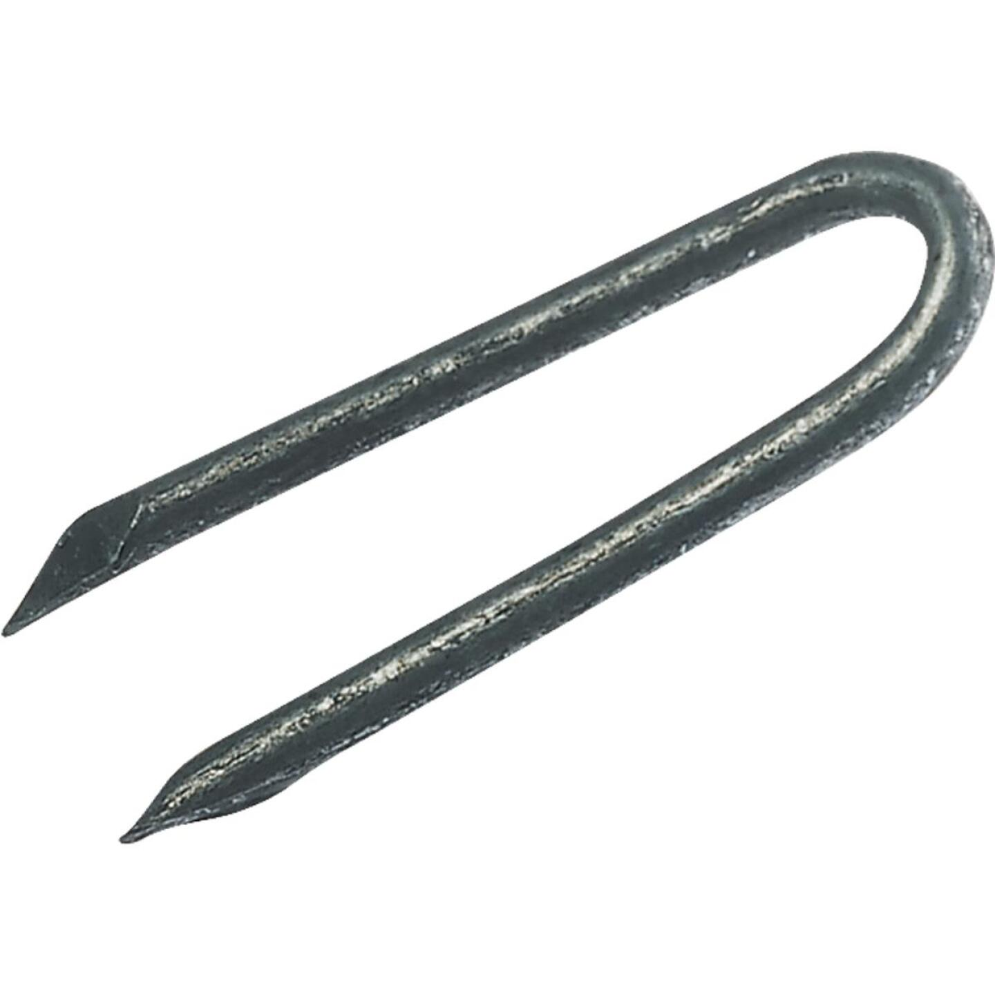 Grip-Rite 1-1/4 In. 9 ga Hot Galvanized Fence Staple (4350 Ct., 50 Lb.) Image 1